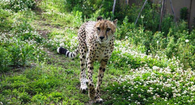 Tour travel Kebun Binatang Zooasia Yokohama Jepang