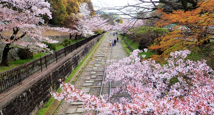 Wisata Bunga Sakura di Keage Incline Jepang