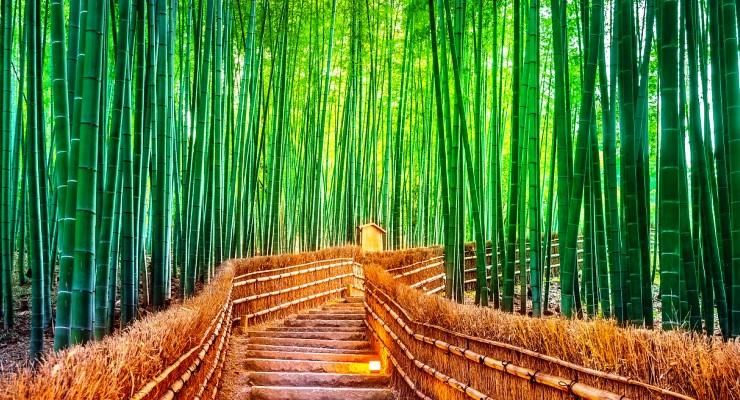Tour Travel ke Hutan Bambu Arashiyama Kyoto Jepang