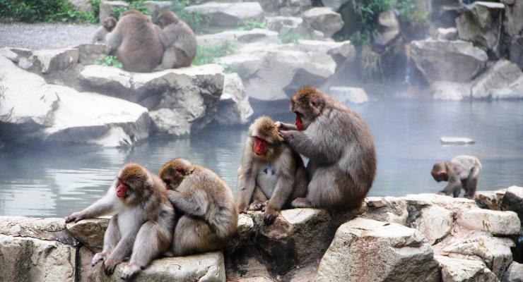 Travel Tour Wisata ke Jigokudani Monkey Park Nagano Jepang